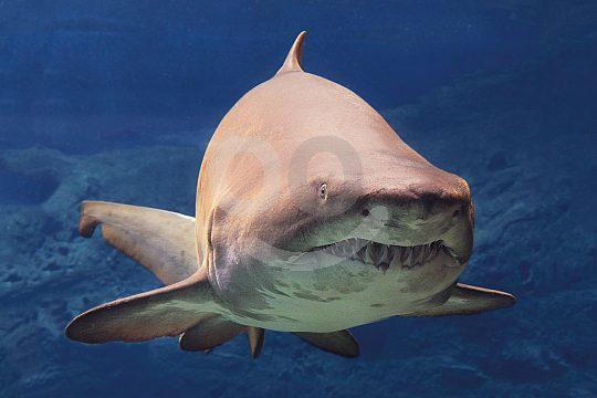 tiburon en Palma Aquarium