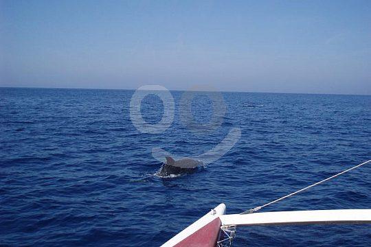 delfines en Menorca