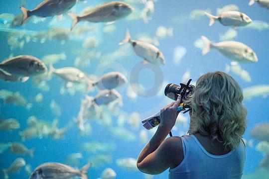código de descuento por Palma Aquarium Tickets