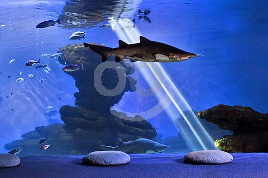 tiburones en Palma Aquarium Mallorca
