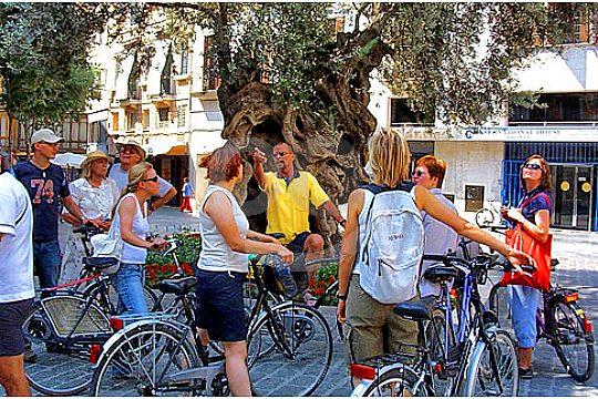 gruppe vor olivenbaum