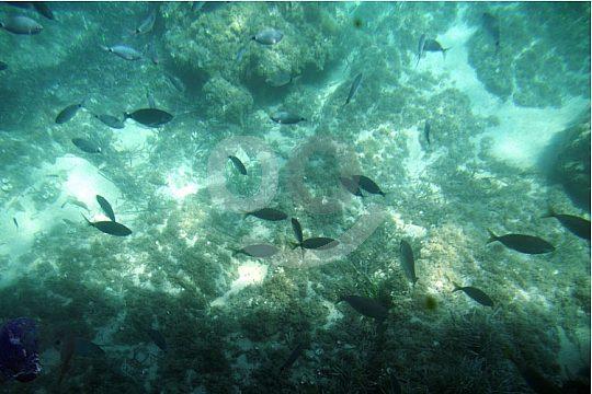 tour en barco de visión submarina a Andratx