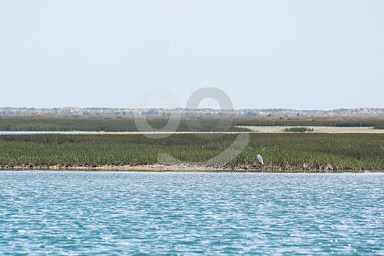 Parque Natural Ría Formosa excursion en barco