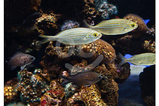 acuario Palma de Mallorca