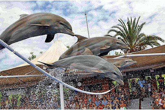 delfin show marineland