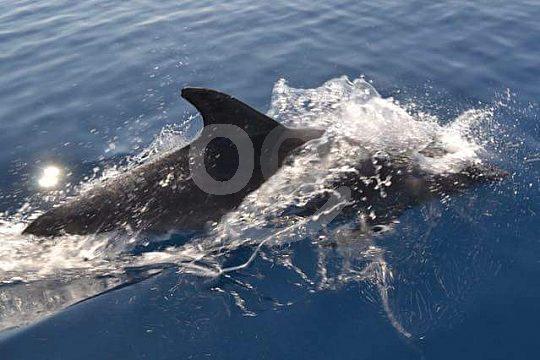 Ver delfines en el Algarve