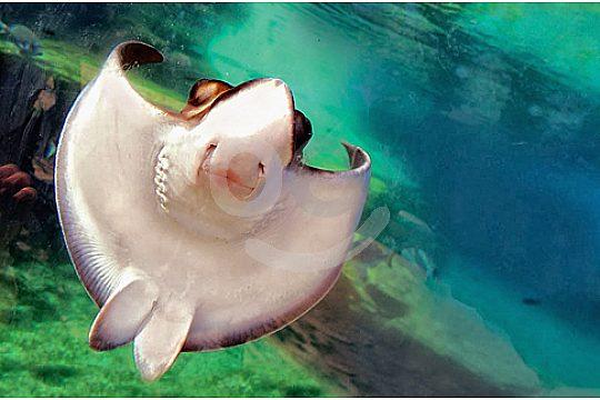 palma aquarium excursión