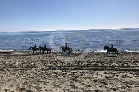 Herrlicher Ausritt am Strand nahe Marbella