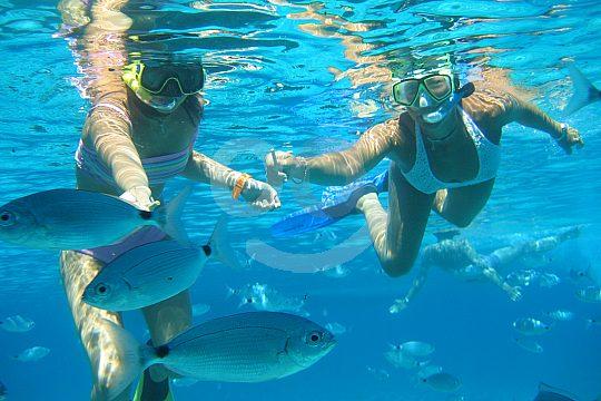 Cerca cerca de peces bajo el agua
