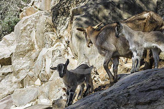 Tiere im Museumsgarten La Granja