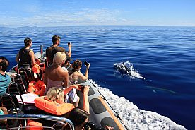 Delfin Bootstour in Madeira