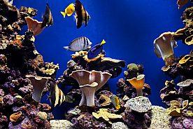 Entrada al Palma Aquarium en Mallorca sur