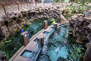 Großaquarium auf Gran Canaria