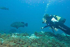 Curso: Bautizo de buceo o curso Open Water de PADI en Santa Pola