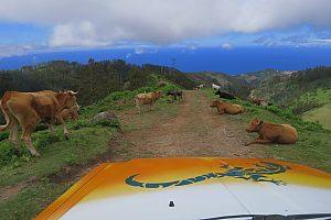 Safari en Jeep desde Funchal: Visita a los volcanes de Madeira
