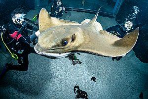 Bucear en Lanzarote con tiburones: experimente esta fascinación en el acuario de Costa Teguise