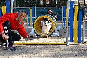 Adiestre su perro por un profesional en el suroeste de Mallorca