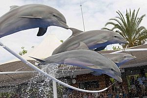 Delfin-Show auf Mallorca im Marineland Portals Nous