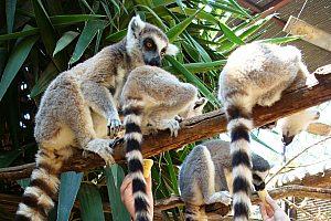 Monkey Park Affe mit Baby Teneriffa