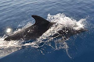 An der Algarve Delfine beobachten