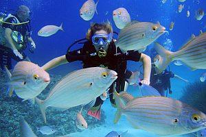 Bautizo de buceo cerca Playa de Palma, Mallorca, o PADI curso Open Water Diver