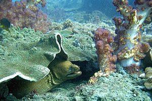 Playa Blanca unter Wasser