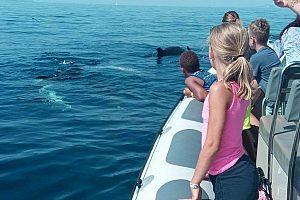 Alcudia Delfin-Bootstour