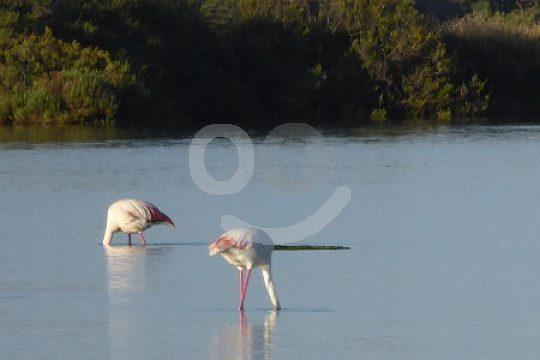 watching flamingos at Doñana Park