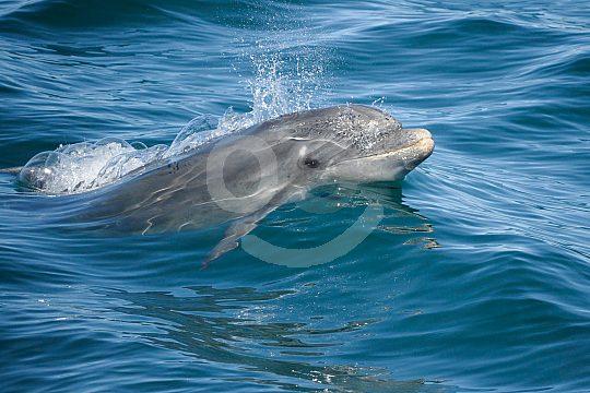 Lebensraum der Delfine an der Algarve