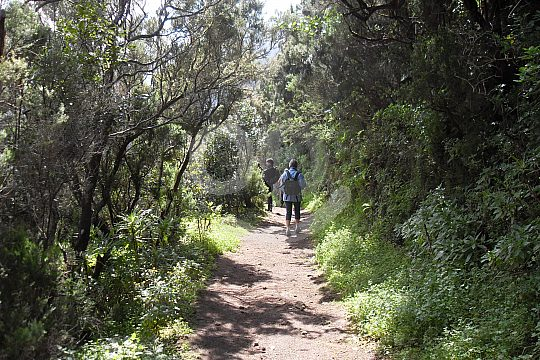 Trekking in Anaga