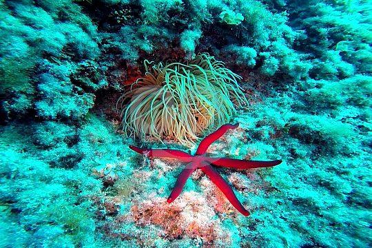 starfish in Mallorca
