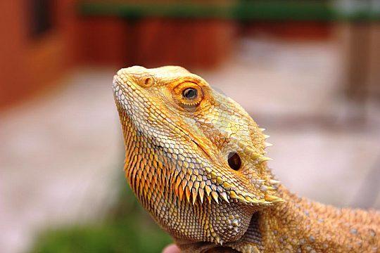 reptiles in Rancho Texas Park