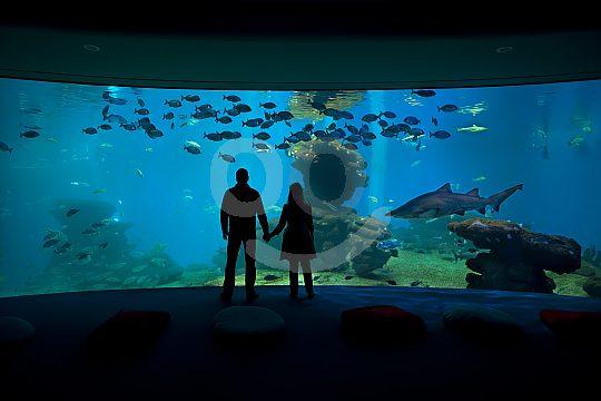 palma aquarium deep blue