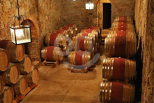 wine cellar at the Barcelona wine tour