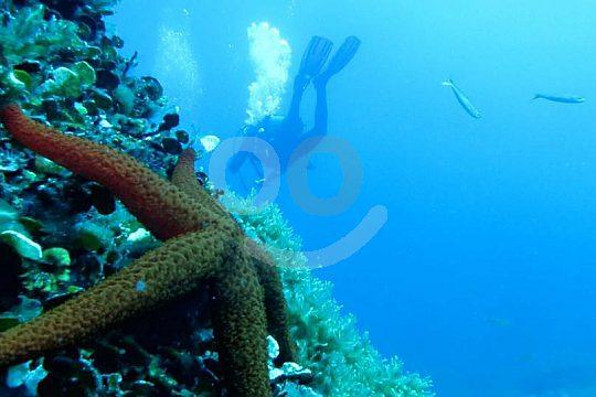 at the Open Water Diver scuba dive course in Santa Pola