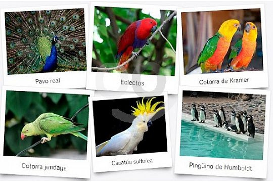 Beautiful world of animals in Lanzarotes Zoo
