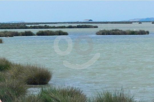 landscape of Doñana Natural Park