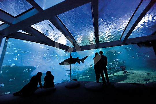 Tickets for Palma Aquarium