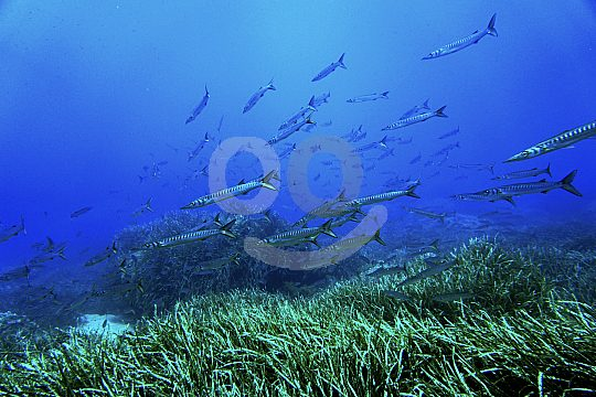 Colourful underwater world Menorca diving