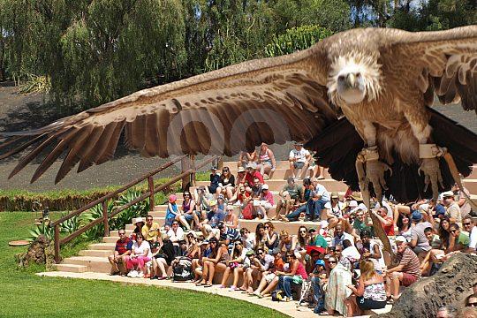 Lanzarote zoo