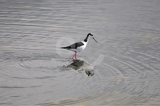 Bird in the Algarve