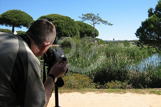 Bird-watching in Ria Formosa Nature Park