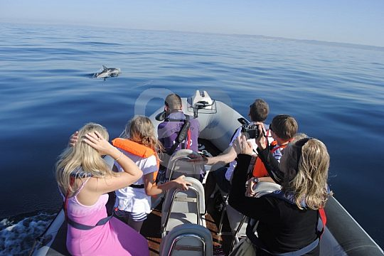 Group Boat Tour Watching Dolphins