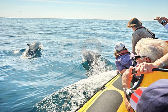 Dolphin watching with a boat trip from Albufeira