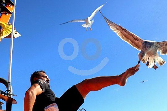 adventure boat tour Fuerteventura seagulls