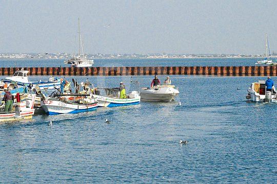Boat tour in the Algarve of the Ria Formosa