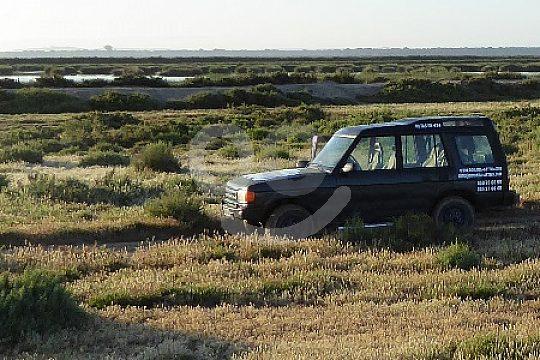 Doñana Jeep Safari