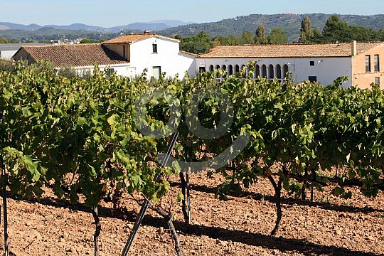 wine degustation near Barcelona