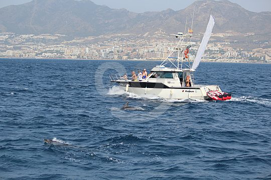 Boat trip with dolphins on the Costa del Sol