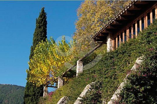greenery in Mallorca